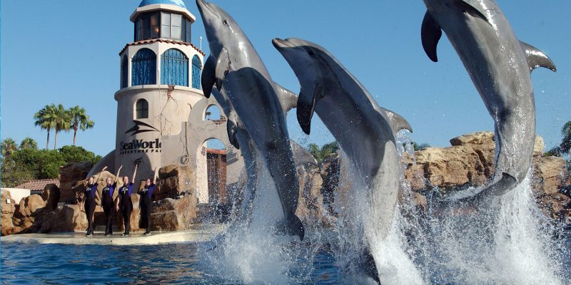 seaworld-san-diego-at-california-top